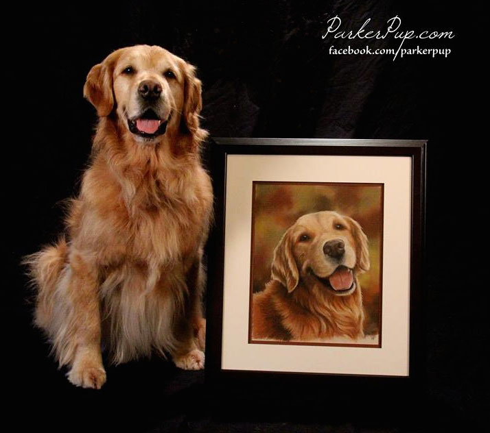 pet portrait parker pup golden retriever dog art
