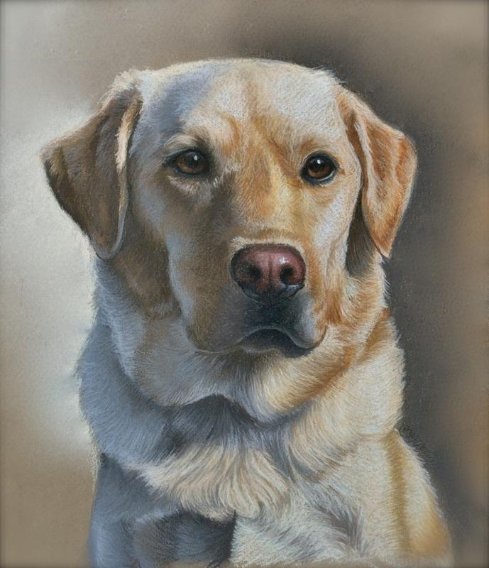 Pet Portraits Imagine Art