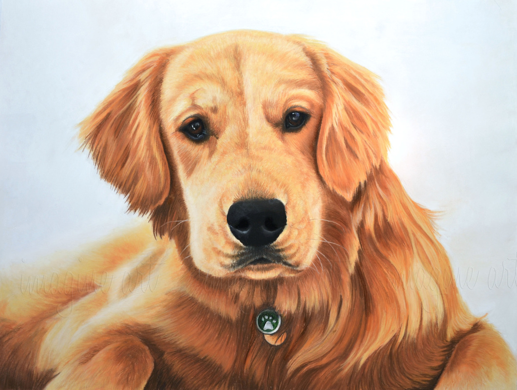 golden retriever custom dog pet portrait jenna harrison