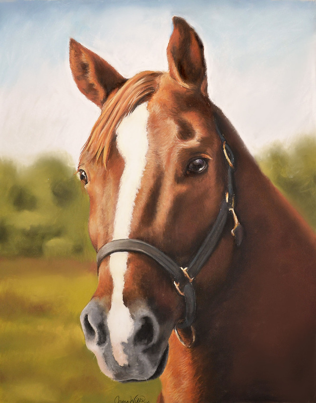 ct horse portrait