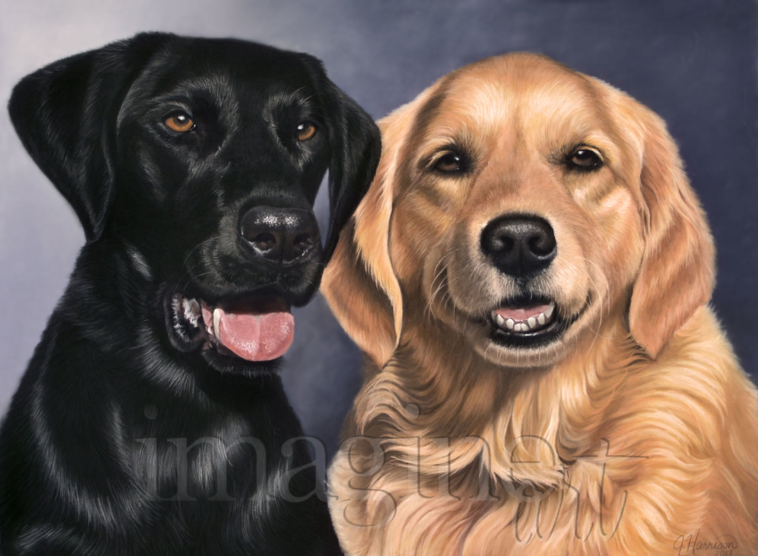 black lab golden retriever pet portraits 921